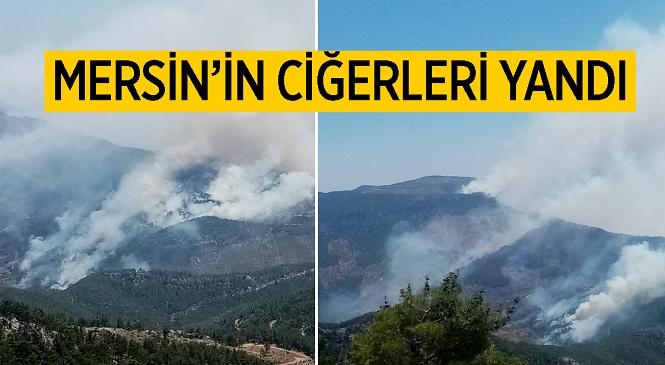 Mersin Aydıncık Pembecik Köyündeki Ormanlık Alanda Yangın Çıktı! Tarım ve Orman Bakanı Bekir Pakdemirli Yangın Bölgesinde