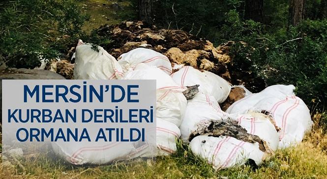 Mersin'in Çamlıyayla İlçesinde Kurban Derileri Ormanlık Alana Atıldı! Görüntüler Tepki Çekti