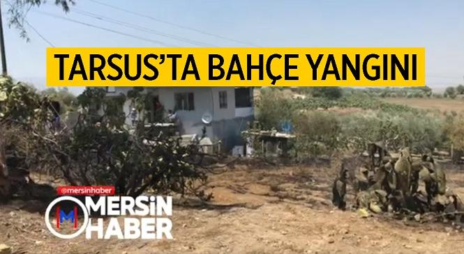 Mersin'in Tarsus İlçesinde Bulunan Zeytin Bahçesi Alevlere Teslim Oldu