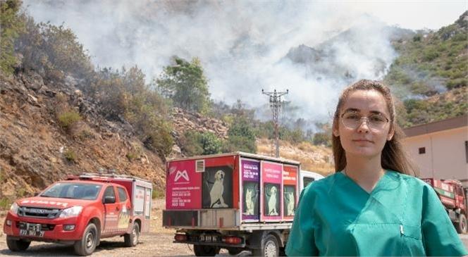 Mersin Büyükşehir, Yangından Etkilenen Hayvanlar İçin Yardıma Koştu