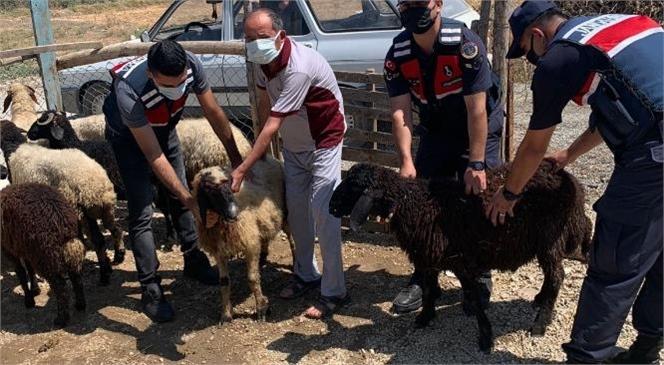 Hayvan Hırsızları Mersin İli Jandarma Komutanlığı Ekiplerinden Kaçamadı
