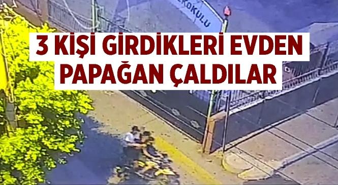 Mersin'de Sabah Saatlerinde Hırsızlık! Girdikleri Evden Papağanı Çaldılar