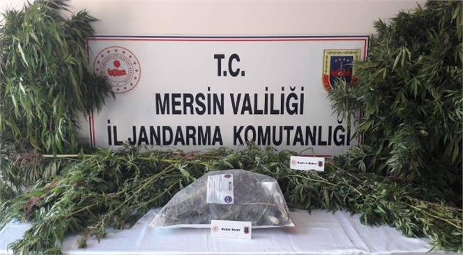 Mersin'de Jandarma Uyuşturucu Kullanıcılarına Operasyon Düzenledi