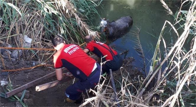 Tarsus'a Bağlı Konaklar Mahallesi'nde Sulama Kanalına Düşen At, Mersin Büyükşehir Belediyesi İtfaiyesi Arama-kurtarma Ekipleri Tarafından Çıkartıldı