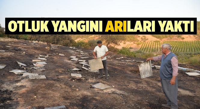 Mersin'in Akdeniz İlçesinde Yangın! Bölgede Bulunan Arılar Yangında Telef Oldu