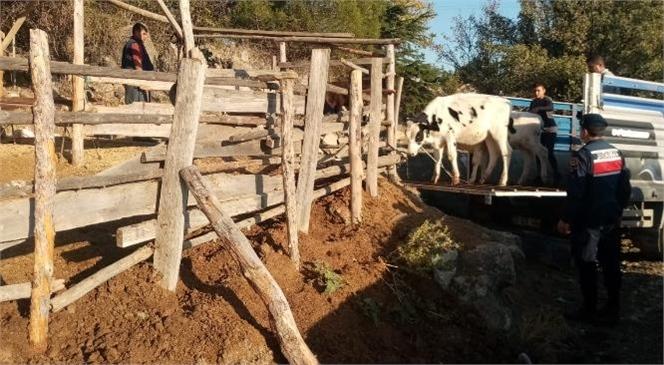 Mersin Çamlıyayla'da Hayvan Hırsızları Suçüstü Yakalandı