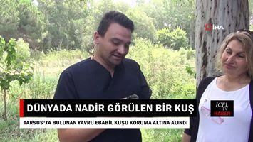 Mersin'de Bulunan Yavru Ebabil Koruma Altına Alındı