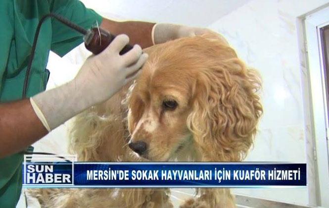 Mersin'de Sokak Hayvanları İçin Kuaför Hizmeti