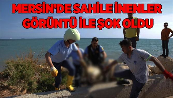 Mersin Sahiline Ölü Caretta Vurdu
