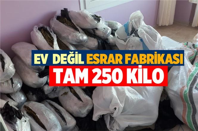 Mersin'de Bir Evde 250 Kilo Esrar Ele Geçirildi