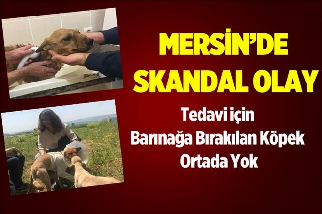 Mersin'de Tedavi için Barınağa Bırakılan Köpek Ortada Yok