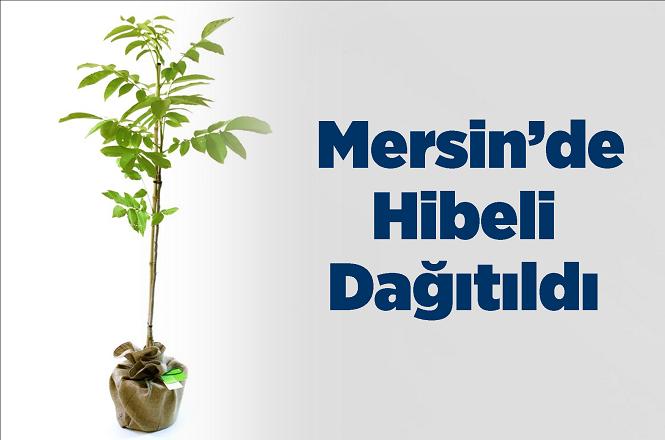 Mersin'de Hibeli Ceviz Dağıtımı Yapıldı