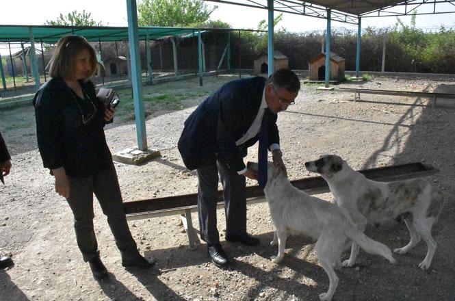 """Başkan Dr. Bozdoğan, """"Bu Şehrin Hayvanları Sahipsiz Kalmayacak"""""""