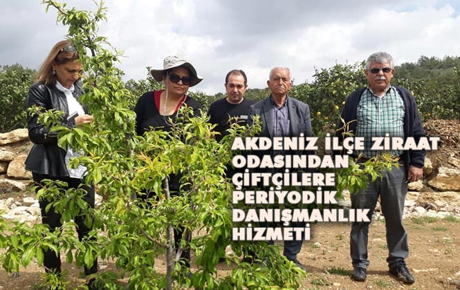 Mersin Akdeniz Ziraat Odası Tarım Danışmanlarından Periyodik Danışmanlık Hizmeti