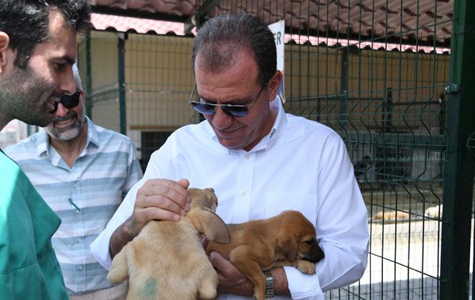 Başkan Seçer'den Hayvan Barınağına Ziyaret