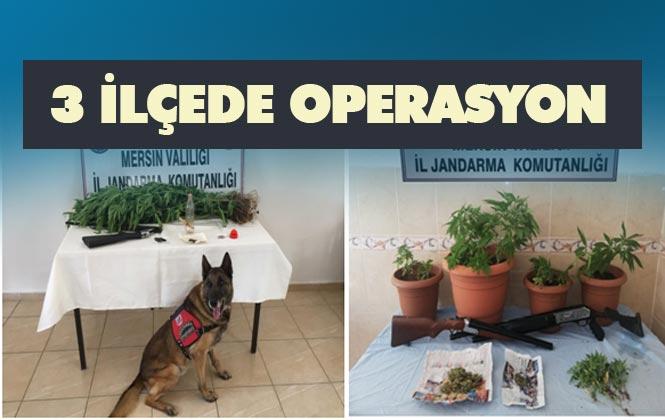 Mersin Mezitli, Anamur ve Tarsus'ta Jandarma KOM'dan 3 İlçede Hint Keneviri Çalışması