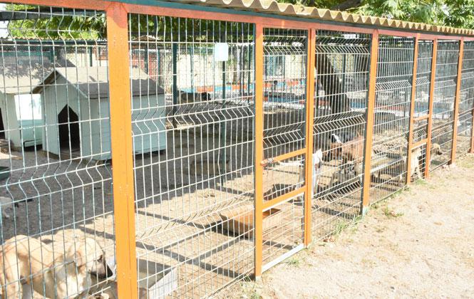 Başkan Bozdoğan, Köpek Bakım ve Islah Evi'ni Onarımdan Geçirtti