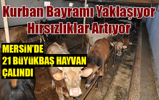 Mersin Tarsus'ta 21 Büyükbaş Hayvan Çalındı