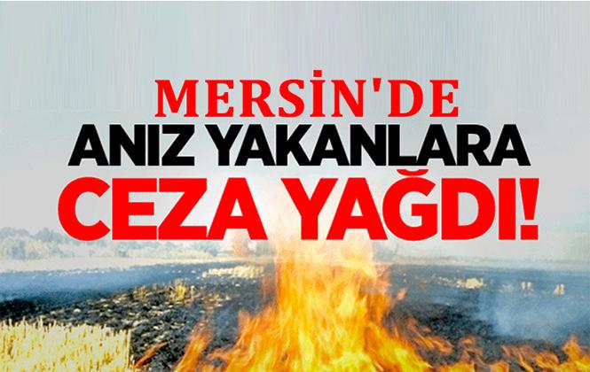 Mersin Tarsus'ta Anız Yakan Çiftçilere Cezai İşlem Uygulandı