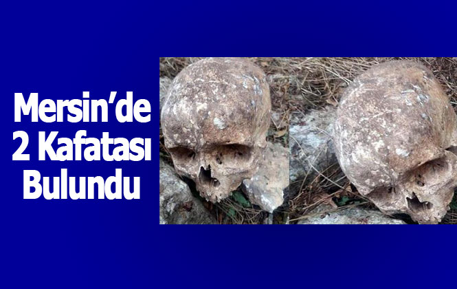 Mersin Çamlıyayla'da 2 Kafatası Bulundu