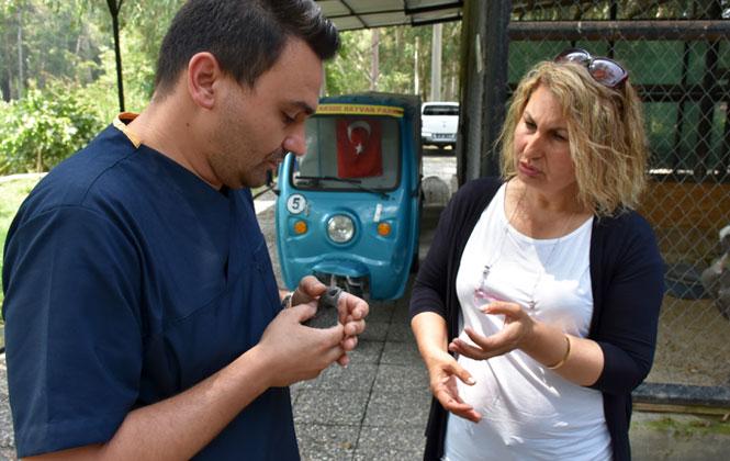 Tarsus'ta Bulunan Ebabil Kuşu Koruma Altına Alındı