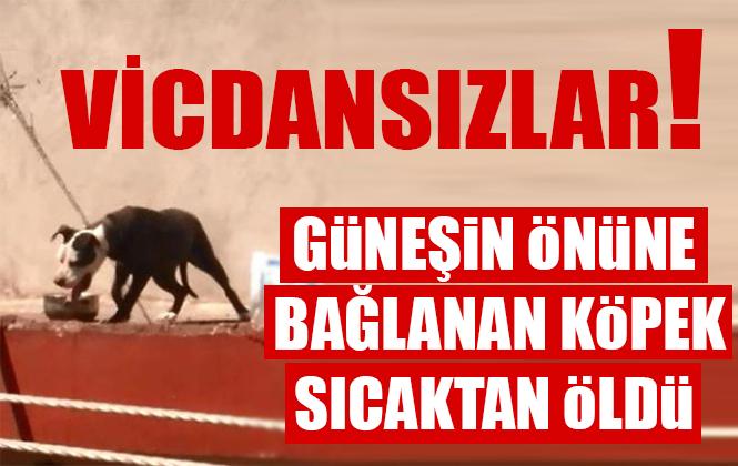 Antalya'da Çatıya Zincirle Bağlanan Köpek Sıcaktan Yaşamını Yitirdi