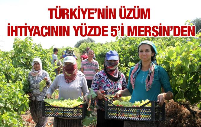 Türkiye'nin Üzümü Mersin'den