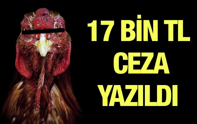 Mersin'de Horoz Dövüşçülerine 17 Bin 600 TL Ceza Kesildi