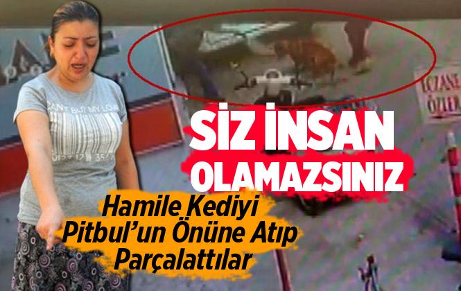 Adana'da Hamile Kediyi Pitbulun Önüne Atıp Parçalattılar