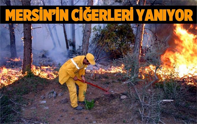 Mersin Silifke'de Orman Yangını
