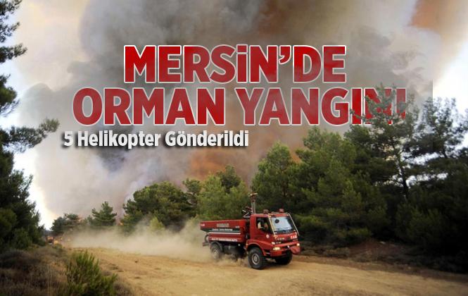 Mersin'de Gülnar'da Orman Yangını