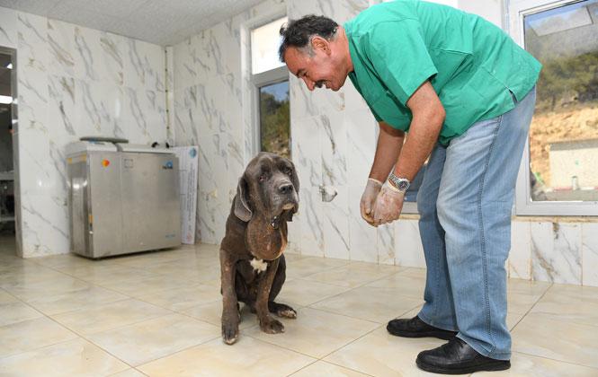 """Sokağa Atılan """"Vefa"""" İsimli 9 Yaşındaki Köpeğe Mersin Büyükşehir Sahip Çıktı, """"vefa"""" Artık Vefalı Ellere Emanet"""