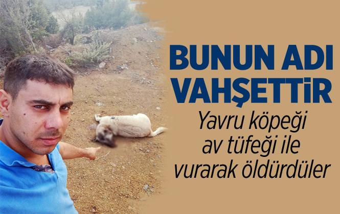 Vicdansızlar! Mersin'de Yavru Köpeği Tüfekle Vurarak Öldüler