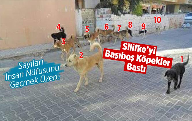 Silifke'de Başıboş Köpekler Tehlike Saçıyor