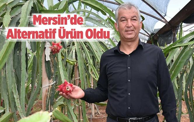 Ejder Meyvesi Mersin'de Alternatif Bitki Oluyor