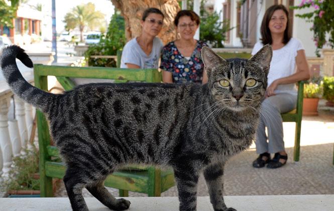 Türkiye'nin En Büyük Hayvan Bakım Evi'nin Daimi İşbirlikçileri