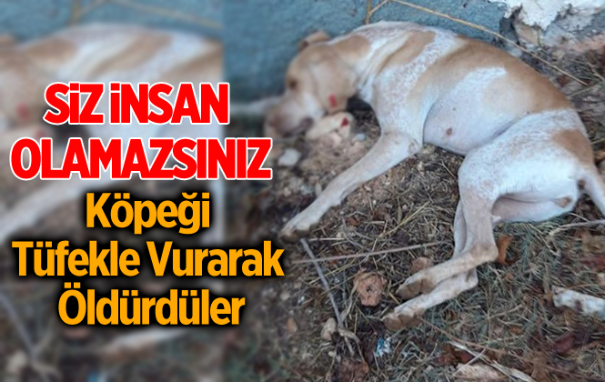 Mersin Tarsus'ta Köpeği Tüfekle Vurarak Öldürdüler
