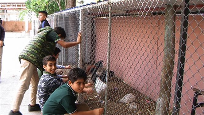 Mersin Tarsus'ta Minik Öğrencilerin Evcil Hayvan Sevgisi Her Geçen Gün Büyüyor