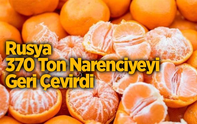 Rusya, Türkiye'den Gönderilen 370 Ton Mandalinayı Geri Çevirdi