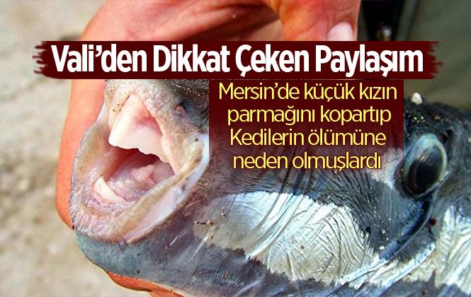 Antalya Valisi Münir Karaloğlu'ndan Dikkat Çeken Balon Balığı Paylaşımı