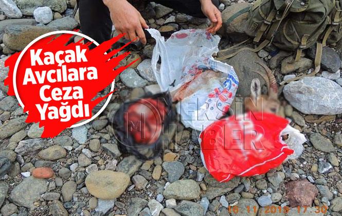 Dişi Yaban Keçisi Avcılarına 52 Bin TL Ceza Kesildi