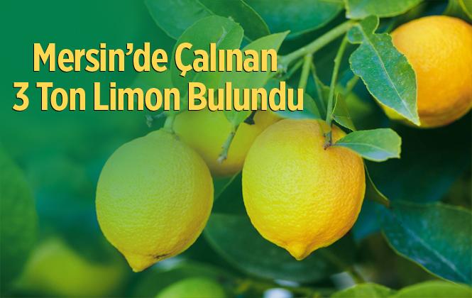 Mersin'de Çalınan 3 Ton 300 Kilo Limon Bulundu