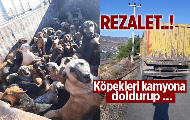 Alanya'dan Kamyona İstiflenen Köpekler Mersin'e Bırakılmak İstendi