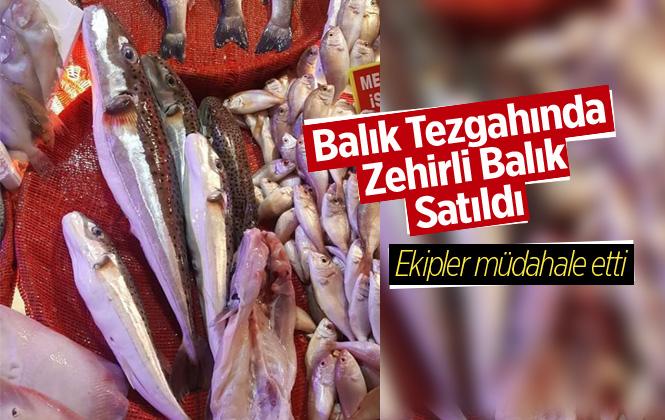 Antalya Döşemealtı İlçesinde Pazarda Balon Balığı Satıldı