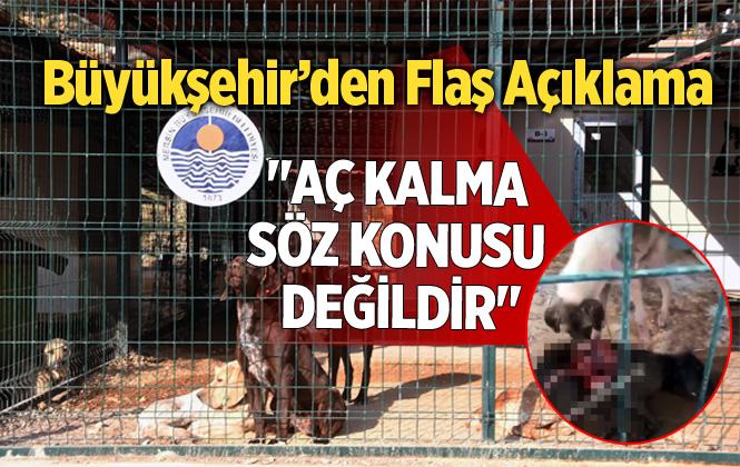 """Mersin Hayvan Barınağıyla İlgili Büyükşehir'den Açıklama """"Aç Kalma Söz Konusu Değildir"""""""