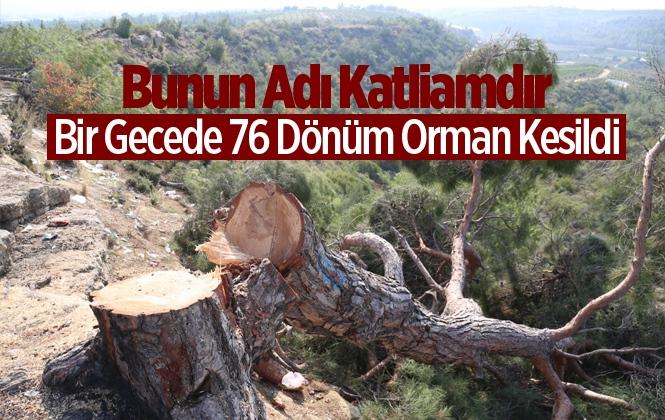 Mersin'de 76 Dönüm Kızılçam Ormanı Bir Gecede Kesildi