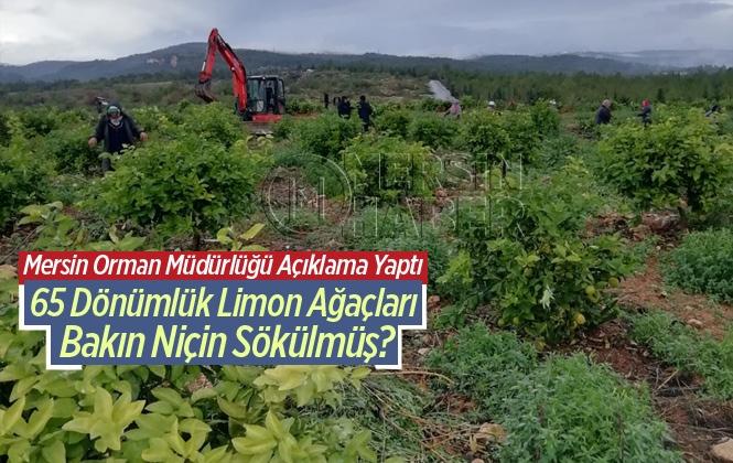 Mersin Orman Müdürlüğünden Ağaç Kesimi İle İlgili Açıklama