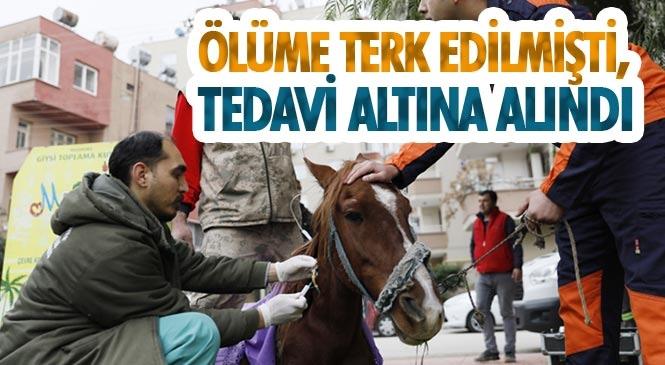 Müftü Deresi'nin Kıyısında Hasta ve Bitkin Halde Bulunan Masum, Tarsus Hayvan Parkı'na Götürüldü