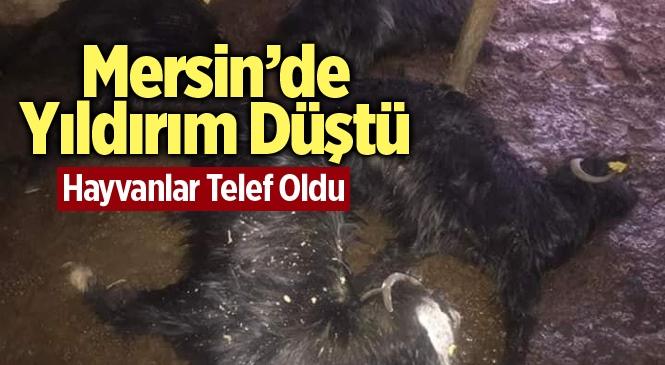 Mersin Gülnar'da Yıldırım Düştü Çok Sayıda Küçükbaş Hayvan Telef Oldu