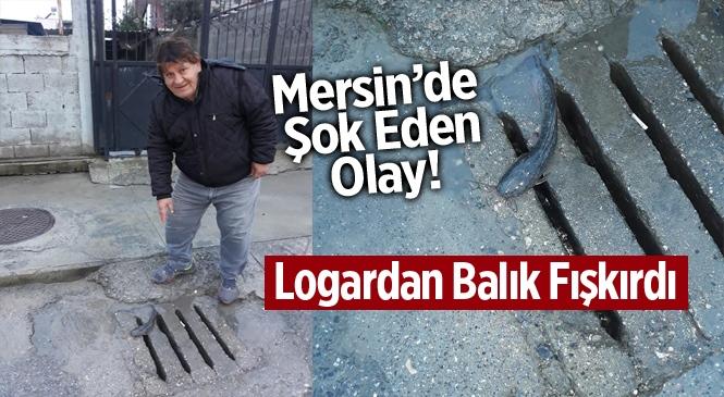 Mersin Tarsus'ta Kanalizasyon Logarından Balık Fışkırdı